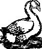 free vector Goose clip art