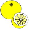 free vector Grapefruit clip art