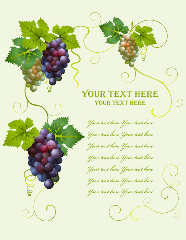 free vector Grapes Vector Grapes Vector