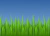 free vector Grass clip art
