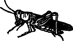 free vector Grasshopper clip art