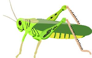 free vector Grasshopper Locust clip art