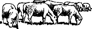 free vector Grazing Sheep clip art