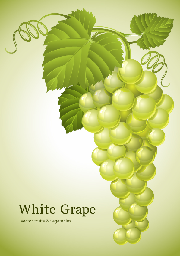 free vector Green grapes vector