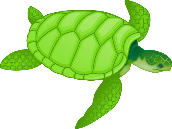 free vector Green Sea Turtle clip art
