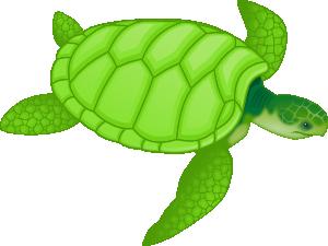 free vector Green Sea Turtle clip art