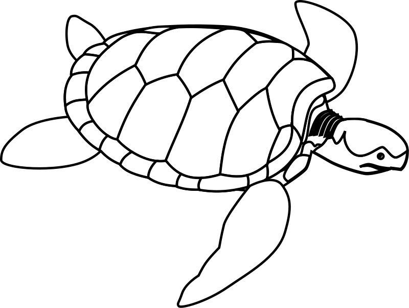 free vector Green sea turtle line art