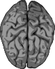 free vector Grey Brain clip art