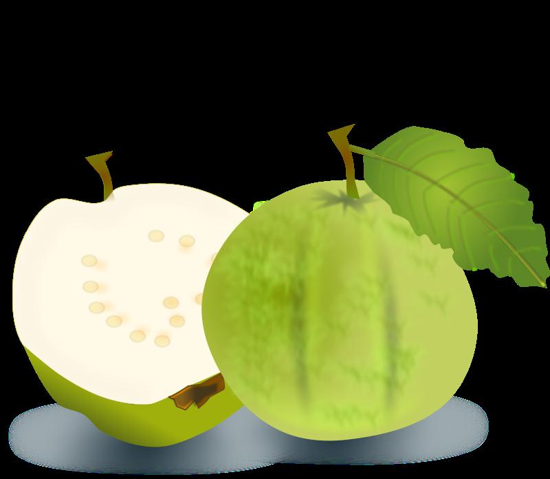 free vector Guava