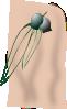 free vector Gumleaves clip art