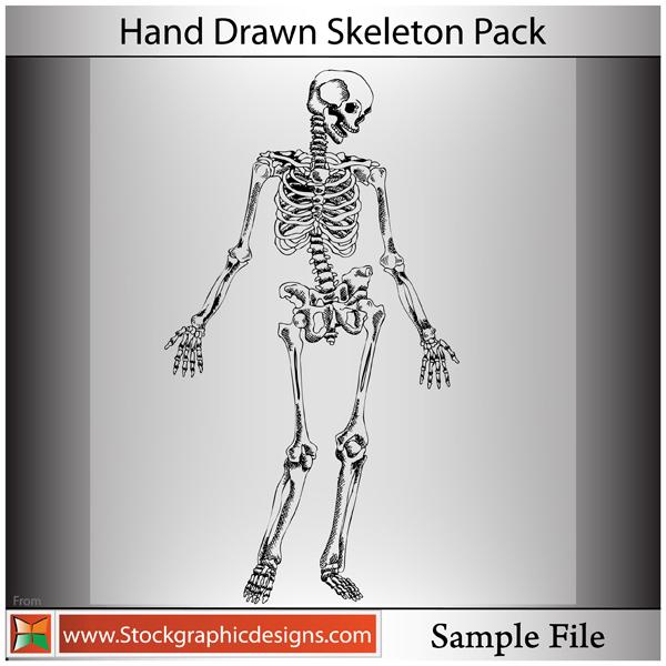 free vector Hand Drawn Skeleton