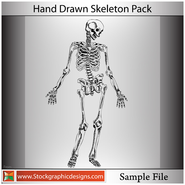 free vector Hand Drawn Skeleton