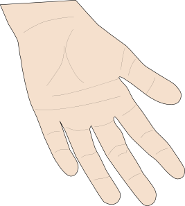 free vector Hand Palm clip art