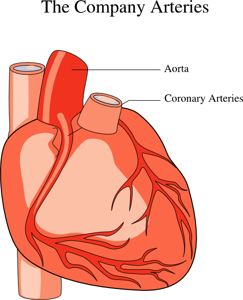 free medical heart clipart - photo #20