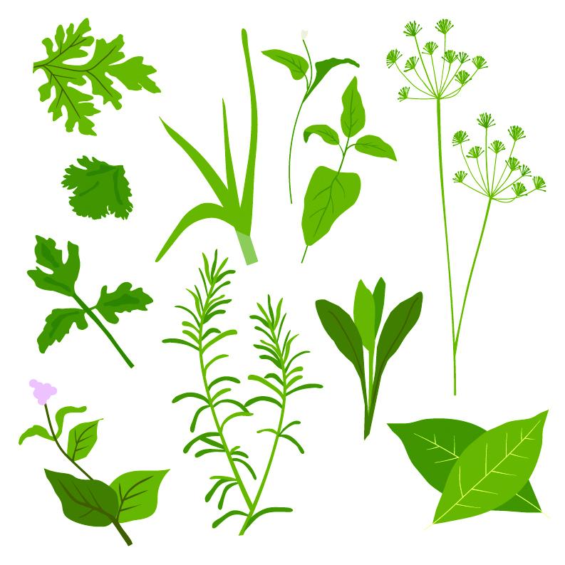 free vector Herbal leaves 01 vector