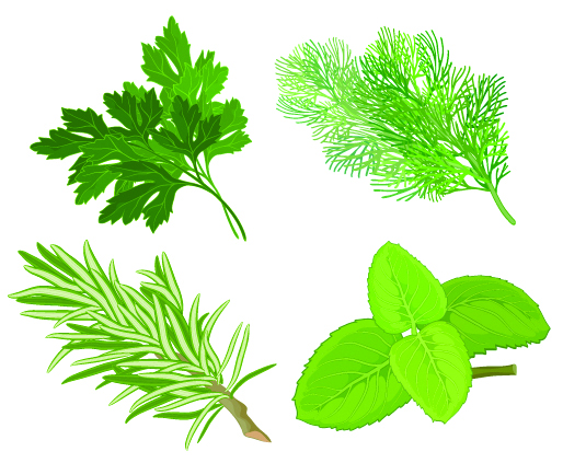 free vector Herbal leaves 04 vector