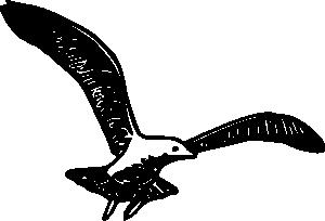 free vector Herring Gull B clip art