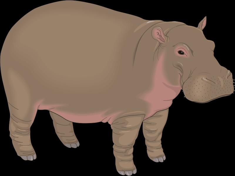 Hippopotamus (99068) Free SVG Download / 4 Vector