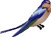 free vector Hirundo clip art