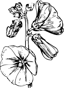 free vector Hollyhock clip art