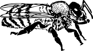 free vector Honey Bee clip art