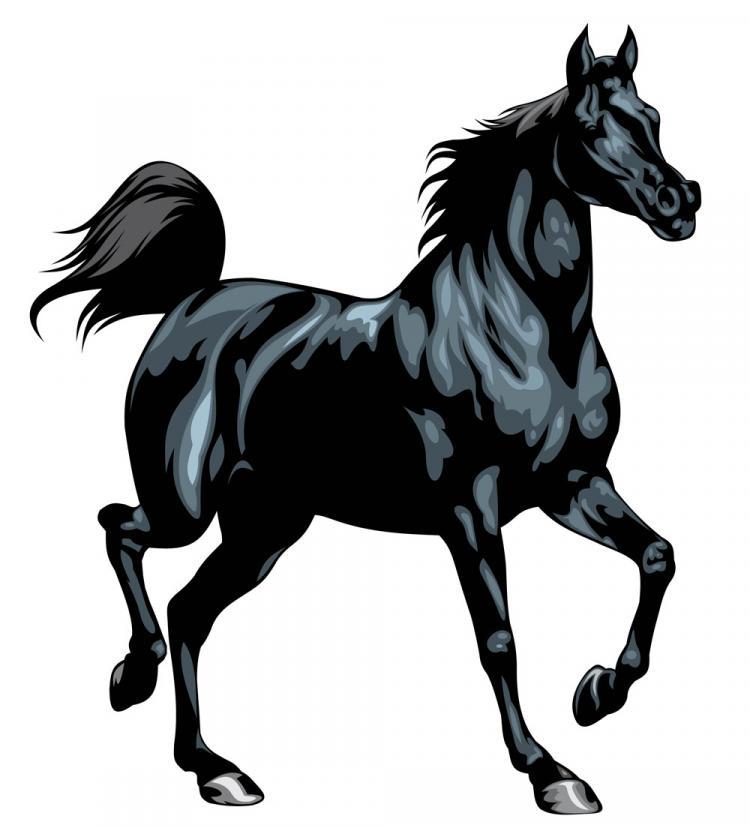 free vector Horse 02 vector