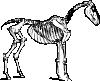 free vector Horse Skeleton clip art