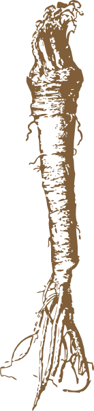free vector Horseradish clip art