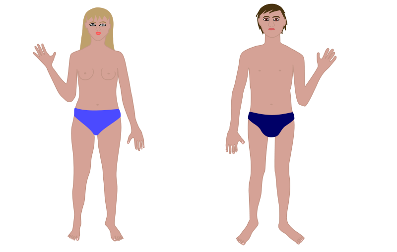 free vector Human body, man and woman