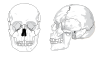 free vector Human Skull No Text No Color clip art