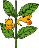free vector Impatiens Capensis clip art