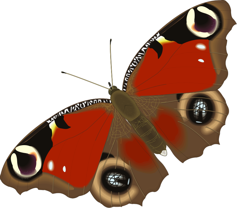 free vector Insect 03