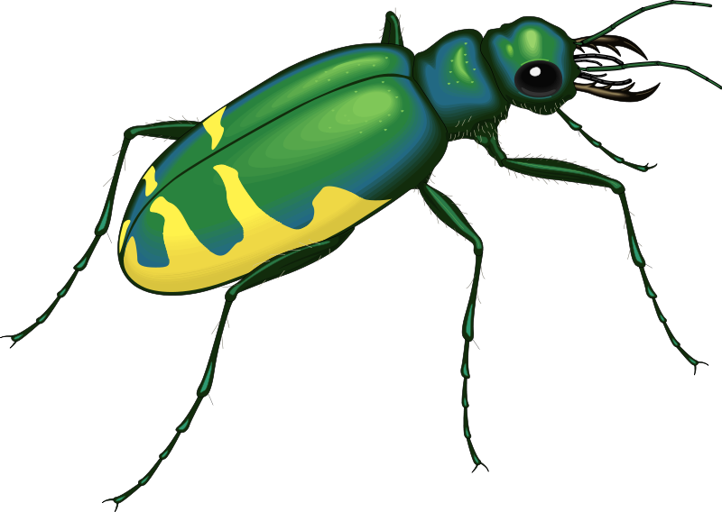 free vector Insect 22