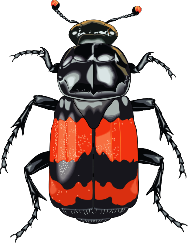 free vector Insect 28