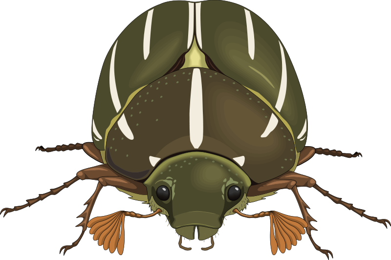 free vector Insect 31