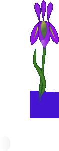 free vector Iris clip art