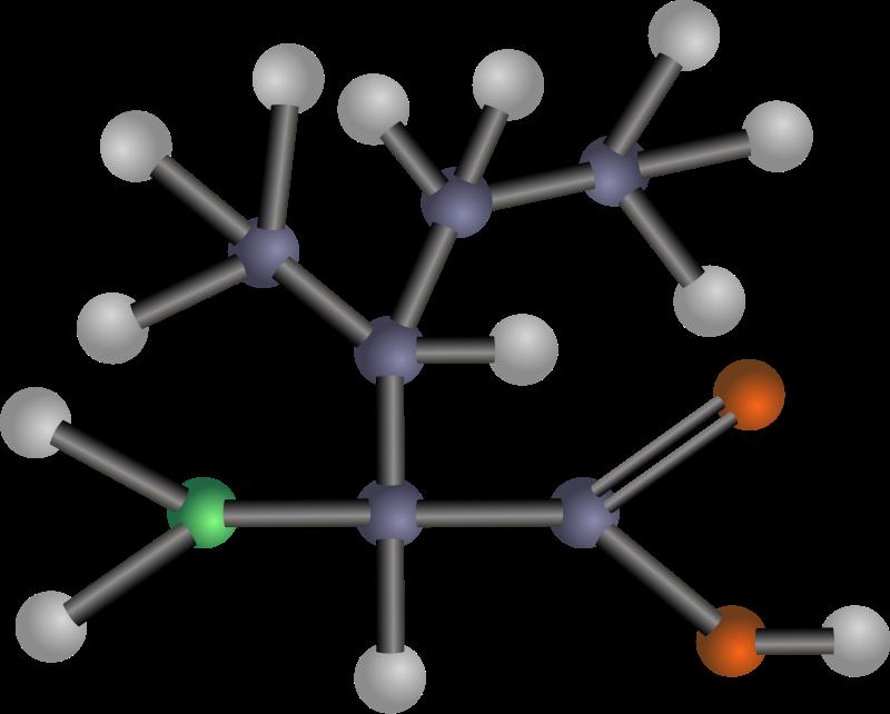 free vector Isoleucine (amino acid)