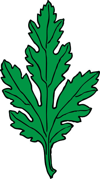free vector Ivy Leaf Green Chrysanthemum clip art