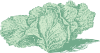 free vector Jersey Cabbage clip art