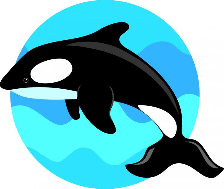 free vector Jumping the whale vector