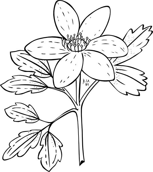 free vector Ku Anemone Piperi Outline clip art