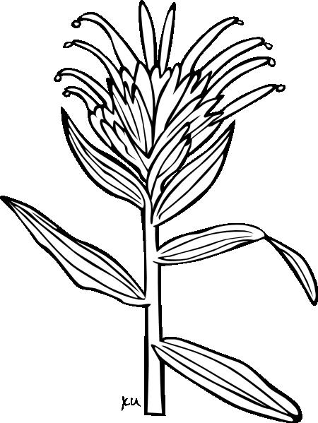 free vector Ku Castilleja Miniata Outline clip art