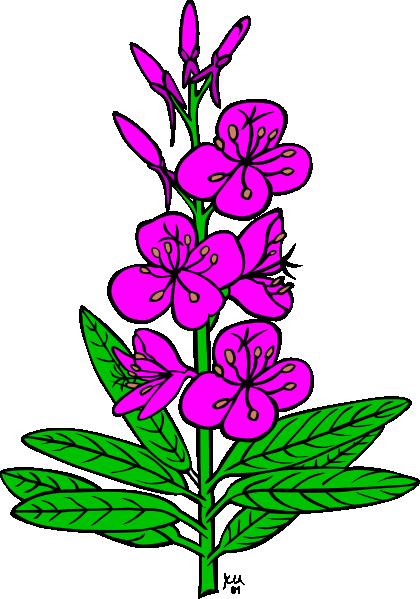 free vector Ku Epilobium Angustifolium clip art