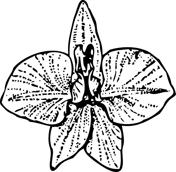 larkspur coloring pages - photo#35