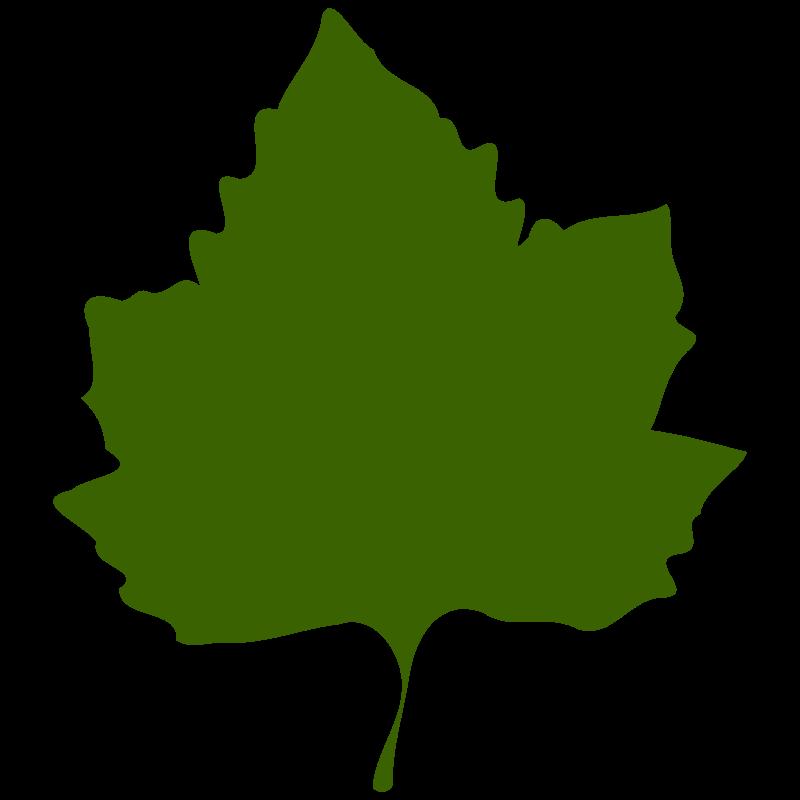 free vector Leaf 02