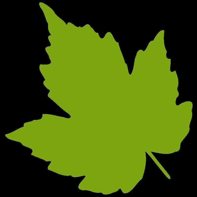 leaf 04 free vector 4vector rh 4vector com vector leaf frame vector leaf pattern