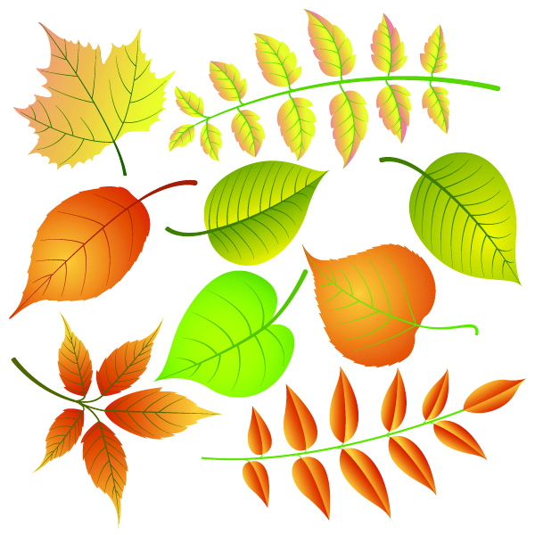 free vector Leaf 05 vector