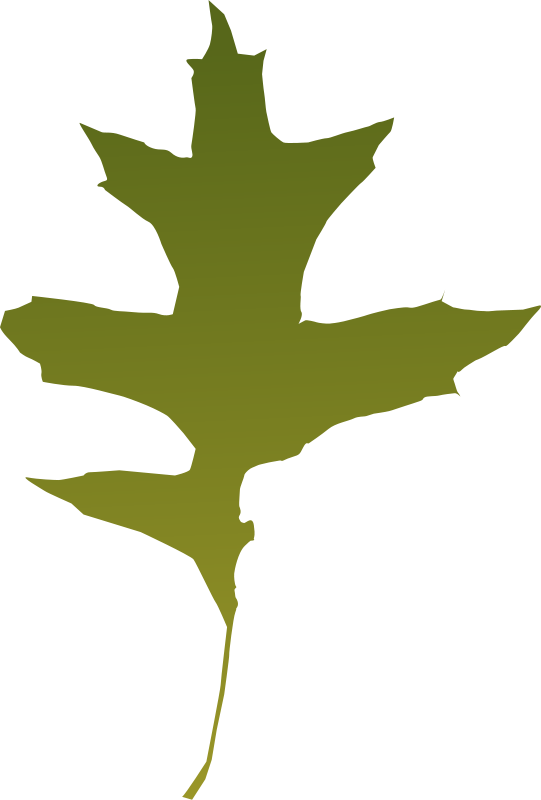 free vector Leaf oak green
