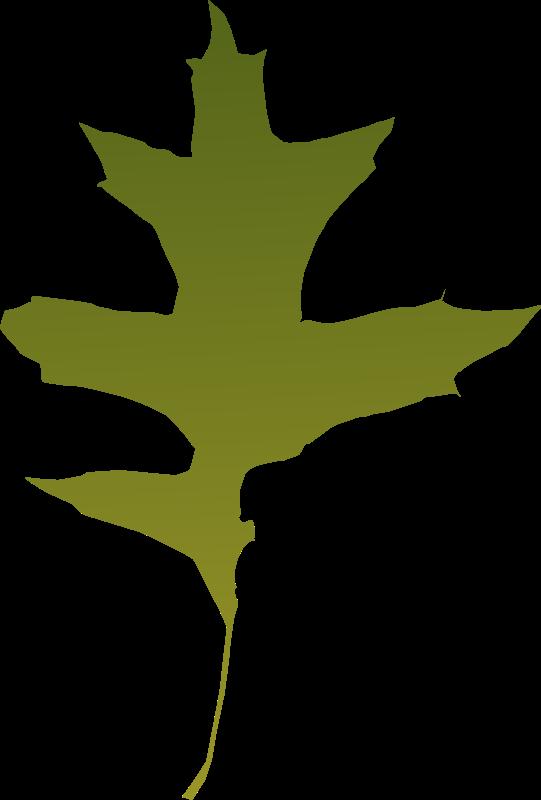 free vector Leaf oak green