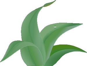 free vector Leaves  clip art